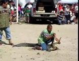 คลิป จระเข้ งับ กัด หัว ศรีษะ โชว์ สยอง ชายหาด Crocodile