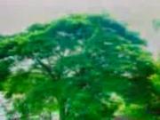 ต้นไม้ของพ่อ.3gp