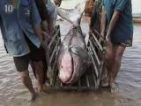 คลิป 10 อันดับ สัตว์ใหญ่ผิดปกติ สัตว์ใหญ่  สัตว์ ใหญ่ผิดปกติ Top 10 Abnormally Big Animals