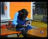 คลิป ขำกลิ้งลิงกับหมา ตอน ให้ปังคุงไปถ่ายรูปเจมส์ pan james animal monkey dog