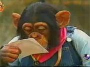 คลิป รายการ ขำกลิ้งลิงกับหมา ปัง เจมส์ pan james animal monkey dog