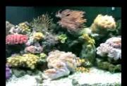คลิป ปลา