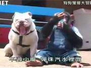 คลิป ขำกลิ้ง ลิงกับหมา ปังคุง เจมส์ monkey dog
