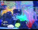 คลิป ปลา ปลาตู้ สี สวยงาม ธรรมชาติ ปลาเลี้ยง