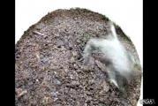คลิป กบ กิน ฆ่า แมลง กัด ธรรมชาติ พิษ