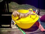 คลิป สุนัขกลัวน้ำ หมากลัวน้ำ กลัวน้ำ อาบน้ำ หมา สุนัข แกล้ง แกล้งหมา Dog Won' t Take A Bath