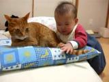 เด็ก น่ารัก แมว น่ากิน หางแมว เล่น หิว