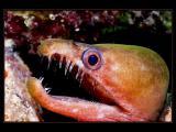 คลิป ปลา สัตว์ทะเล แปลก