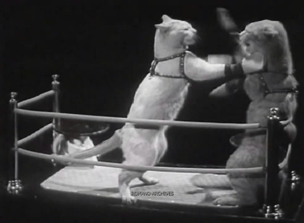 แมว หมา Cat Pet โฆษณา 1937 2480 ละครสัตว์ เกรดเอ ผลงาน เยี่ยม Checy new steel  b