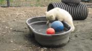 คลิป ลูกหมีขั้วโลก กับก้อนน้ำแข็ง  น่ารักมาก