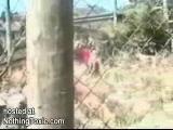 สัตว์ สัตว์ สยอง น่ากลัว หวาดเสียว สิงโต ดุร้าย