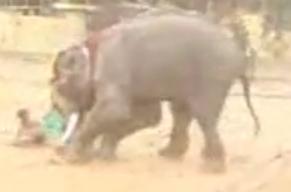 ช้างตกมัน อาละวาด