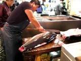 คลิป ฝีมือ ขั้นเทพ แล่ปลา ปลาทูน่า ตลาดปลา Tsukuji ญี่ปุ่น