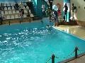 ชกต่อยกัน ในสวแสดงสัตว์น้ำ