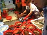คลิป ปลา ปลาสด ตลาดปลา ฮ่องกง
