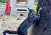 คลิป แมว น่ารัก LAZY CAT