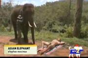 หมอนวด ช้างไทย