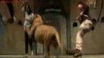 คลิป  โหด สัตว์ สาว สยอง ดารา พลาด เสียว นักแสดง ทำร้าย สิงโต