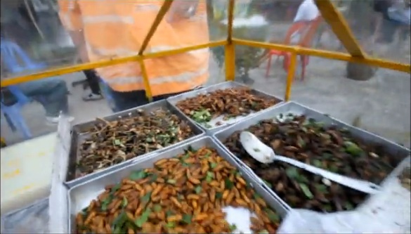 เขียดทอดมาแล้ว - fried insects - funny video-WWW.FARANGLAND.NET