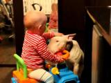 คลิป เด็กน่ารัก เด็กกับหมา เด็กน้อย สุนัข สุนัขเชื่อง หมา ไร้เดียงสา Baby vs. Hund