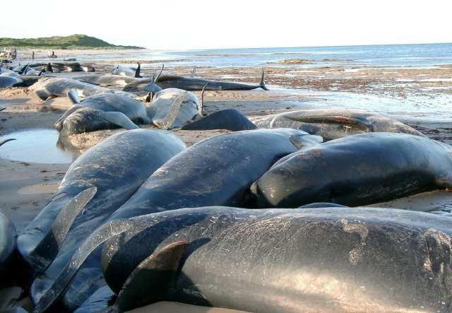 สัญญาณ วันสิ้นโลก  2012  เรื่องจริง ภัยพิบัติ ภัยธรรมชาติ พายุ น้ำท่วม สึนามิ มห