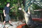 เผยภาพ คลิป จระเข้ยักษ์ ที่สุดในโลก ปัจจุบัน จระเข้ ออสเตรเลีย แคสเซียส เคลย์