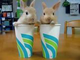 ถ้วยกระต่าย น่ารักจังเลย