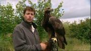 นกอินทรี บิน สวยงาม สารคตี กล้อง ทดสอบ bbc