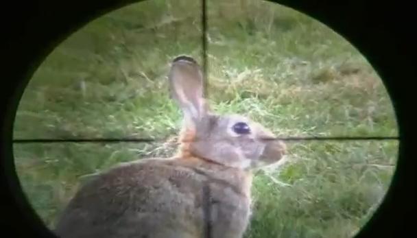 ยิง กระต่าย ตาย คาที่  น่าสงสาร