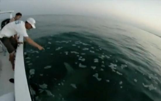 ฉลาม ฉลามหัวค้อน ใหญ่มาก น่ากลัว ตกปลา ทะเล ระทึก ตื่นเต้น หวาดเสียว