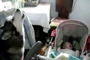 คลิป สุนัข ร้องเพลง ปลอบเด็ก เด็กร้องไห้ หมาร้องเพลง