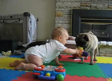 คลิป เด็ก น่ารัก น่าเอ็นดู หมา ขี้หวง ของเล่น ขำๆ ตลก เฮฮา คลายเครียด