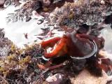 ปลาหมึกยักษ์ ปลาหมึก ปลาหมึกเกยตื่น ชายทะเล ชายฝั่ง นักท่องเที่ยว สัตว์น้ำ octo