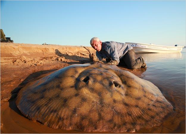 คลิป อุบ๊ะ! หนุ่มใหญ่อังกฤษตกปลากระเบนไซส์ใหญ่ยักษ์ได้