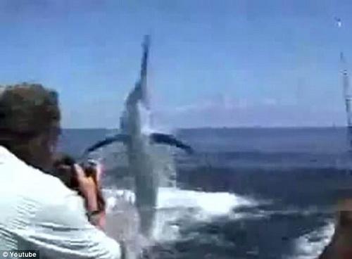 คลิป เฉียด ตกปลา ปลากระทงยักษ์