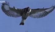 คลิป สัตว์ กัด นก ปลา สโลโมชั่น บิน สูง อากาศ กิน อาหาร ดิน น้ำ ลม ไฟ