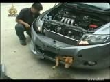 รถชนหมา เรื่องเด่นเย็นนี้ ชีวิตสัตว์ หมาท้องแก่โดนรถชน