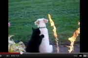 คลิป แมวนึกอารมณ์ดี มานวดสปาให้หมาซะงั้น