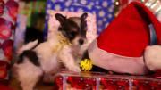 คลิป ลูกหมา ลูกสุนัข เล่น สนุกสนาน กล่องของขวัญ