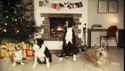 สุนัขร้องเพลง เพลงจิงกาเบลล์