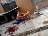 คลิป ชายชาวบลาซิล ถูกสุนัข Pitbull ขย้ำปางตาย
