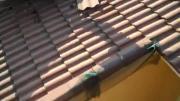 คลิป ค้างคาว ค้างคาวใต้หลังคา ซ่อนตัว ขนลุก สยอง Insane Bat Infestation Under Roof