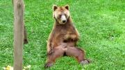 หมี หมีเกาไข่ หมีทะลึง ลามก ทะลึง ช่วยตัวเอง คันไข่ เกาไข่