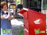 คลิป คลิปแกล้งคน -ส่งพัสดุสุนัขตัวเป็นๆ