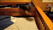 หมากระโดด สุนัขกระโดด หมาดีใจ หมาตื่นเต้น สุนัขกับหนู น้องหมาตื่นเต้น
