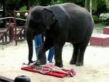 ช้างไทย นวดแผนไทย