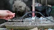 ภาพประทับใจจากสุนัขที่ดูแล้วน้ำตาจะไหล ✪