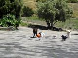 ตลก ขำๆ ฮา เฮฮา คลายเครียด หมา น้องหมา สุนัข หมู สัตว์เลี้ยง เล่น วิ่งเล่น ลูกบอล โฮมวีดีโอ เนียน
