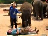 ขำๆ, ฮาๆ, ปวดเมื่อย, ช้างไทย,นวด,นวดถูกจุด