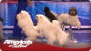 น้องหมา นักเต้น แข่งขัน อเมริกาก็อตทาเลนต์ น่ารัก ฉลาด
